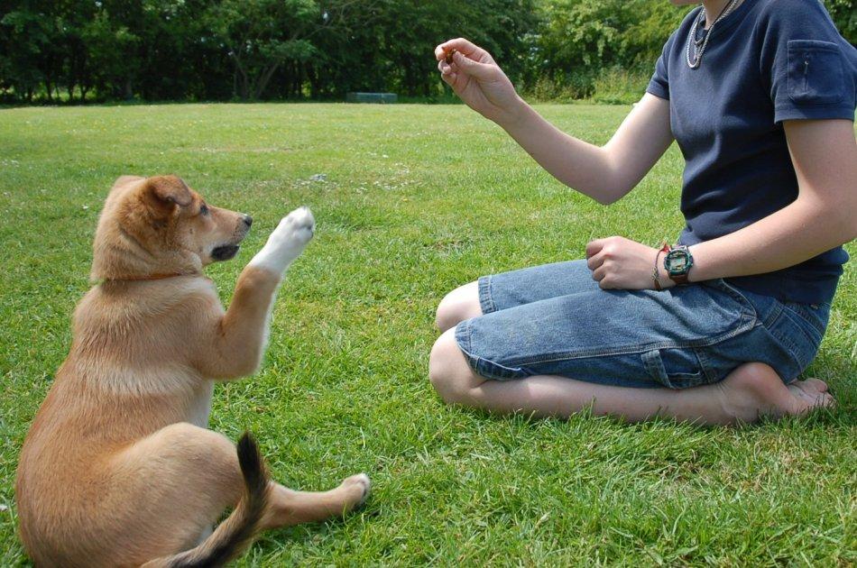Обучение собак из приюта