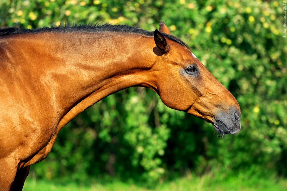 Умная лошадь
