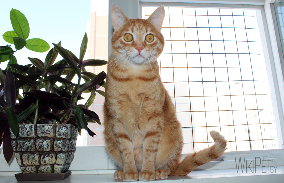 Рыжий кот сидит на окне