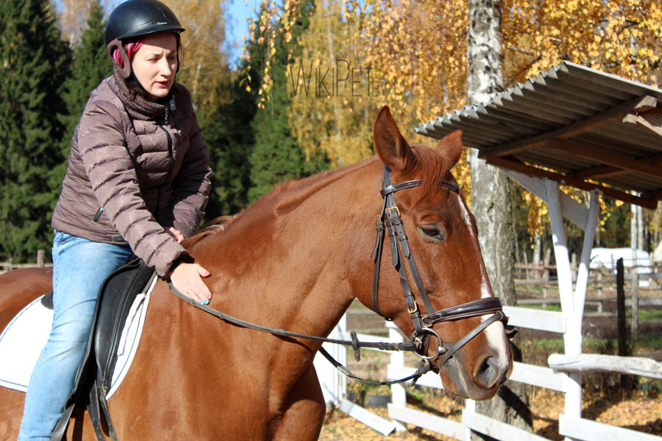 Рыжая лошадь с проточиной фото