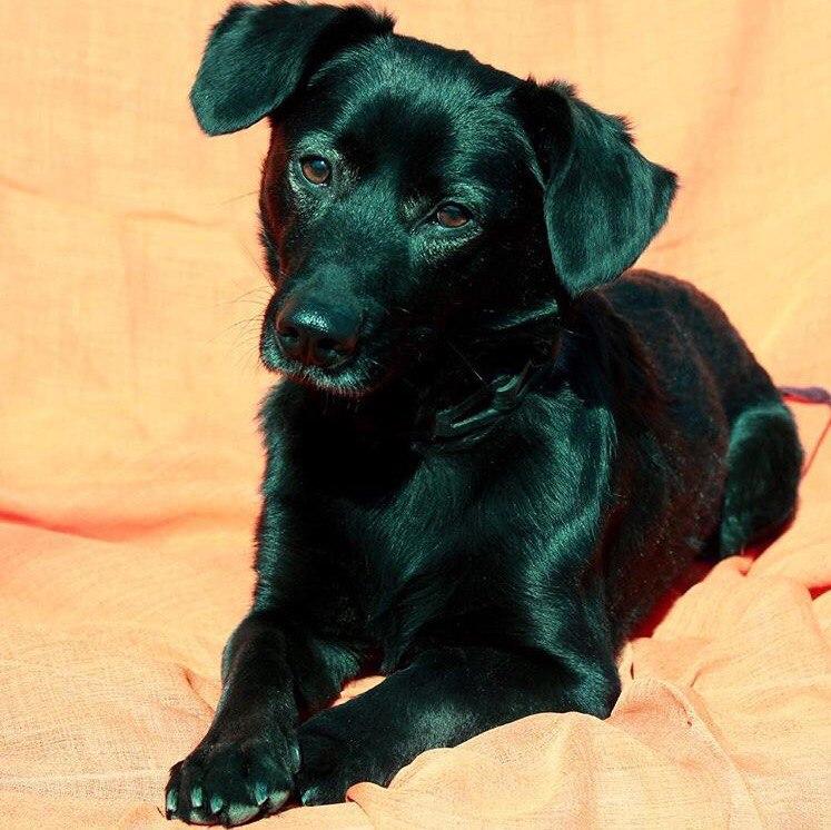 собака,пес,требуется помощь,приют,бездомное животное