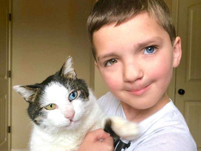 кот,ребенок,гетерохромия.