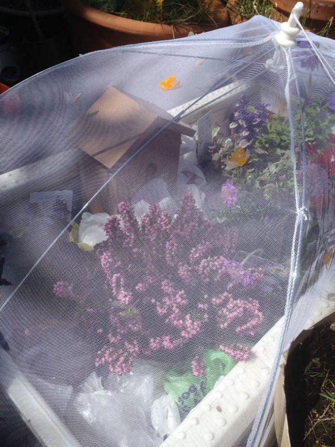 цветы,домик,насекомое