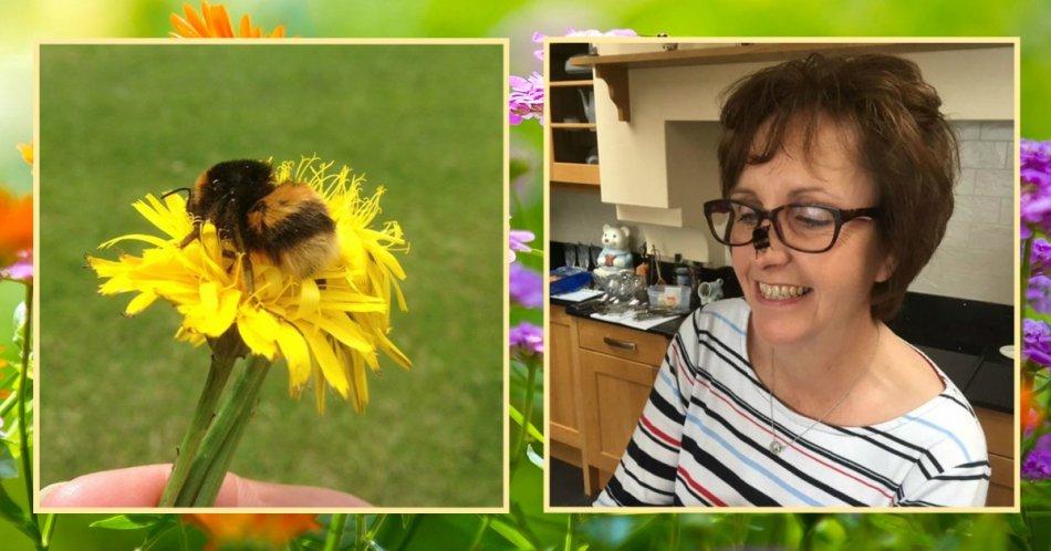 шмель,доброта,цветы,насекомое