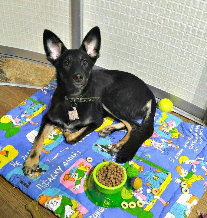 пес,собака,бездомное животное,приют