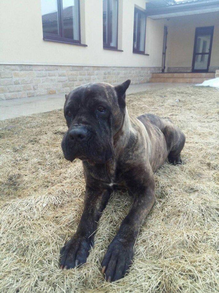 собака,пес,бездомное животное,пес,требуется помощь