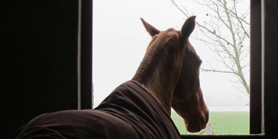Уши лошади повернуты назад
