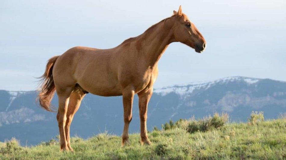 Уши лошади направлены в разные стороны фото