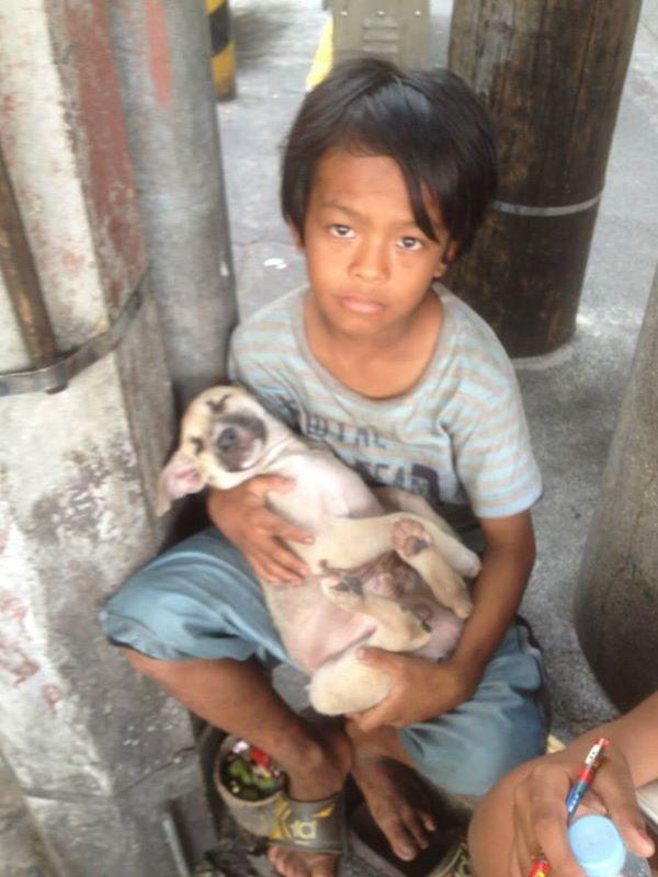 собака,пес,животное,бездомное животное,мальчик