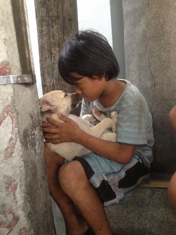 собака,пес,бездомное животное,ребенок,мальчик
