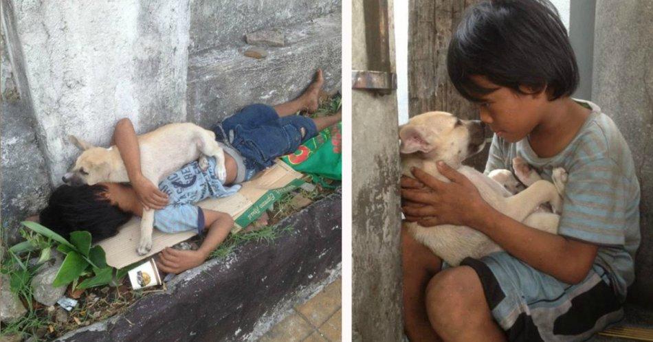 собака,пес,ребенок,мальчик,брошенное животное
