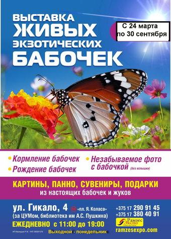 Выставка живых экзотических бабочек