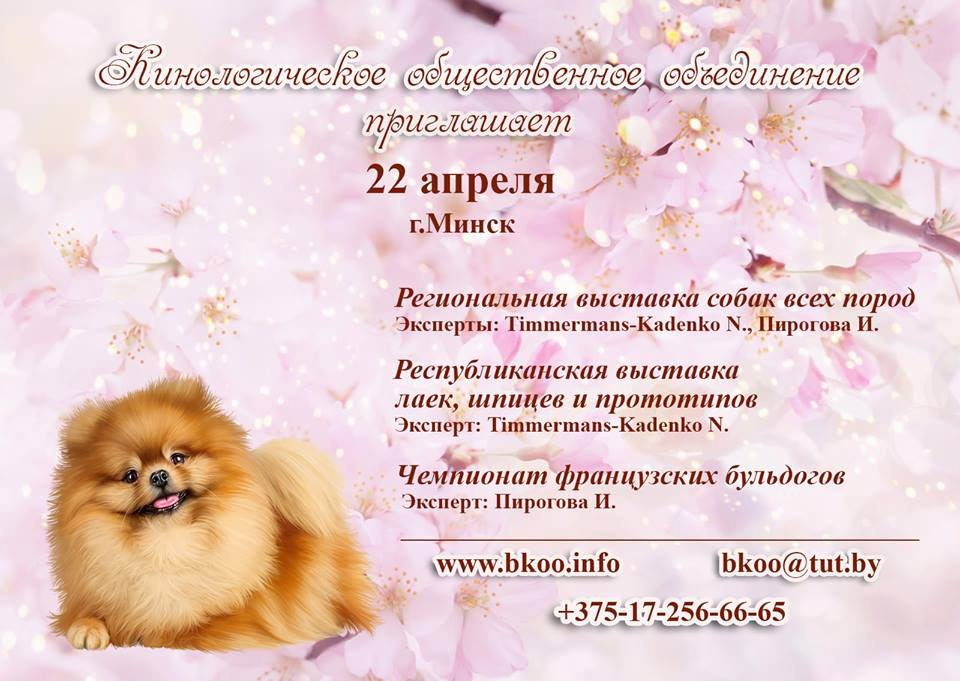 Выставка собак в Ратомке