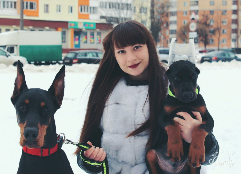 Доберман взрослый и щенок фото