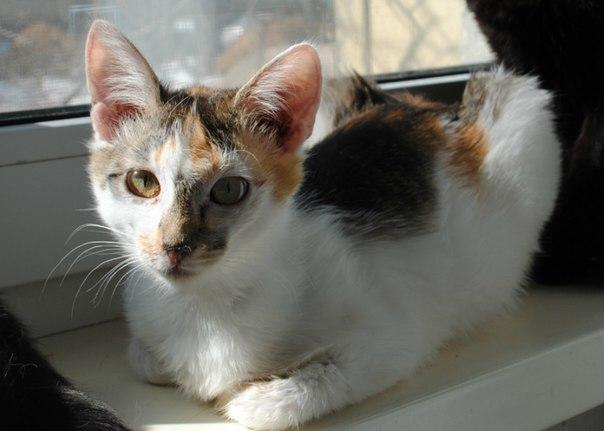домашнее животное, спасение, дикое животное, помощь, кот, кошка