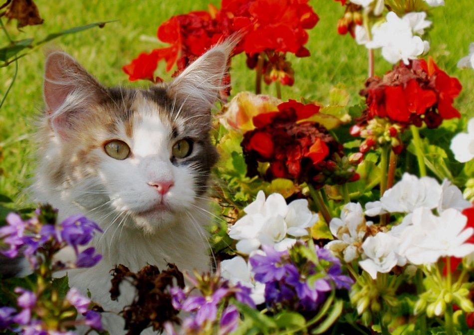 Ядовитые растения для кошек на улице фото