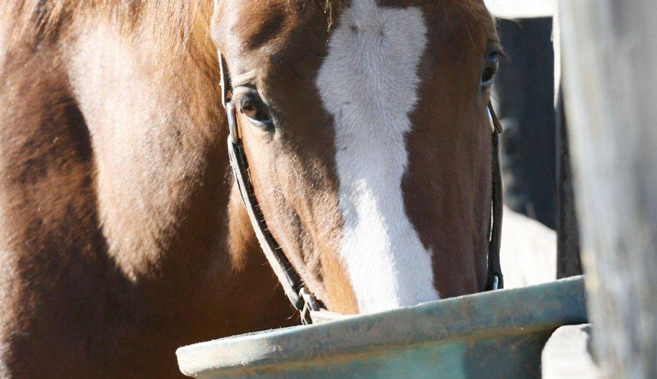Лошадь ест из кормушки фото
