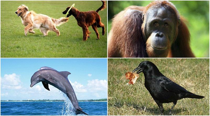 Какое животное самое умное фото