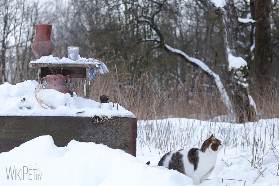 Кот сидит в снегу