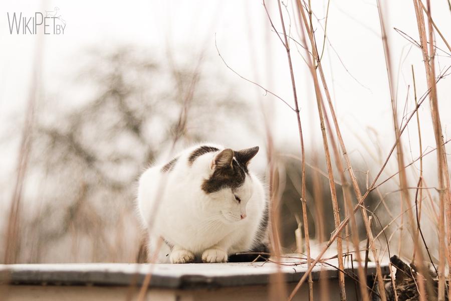 Красивая фотография кошки