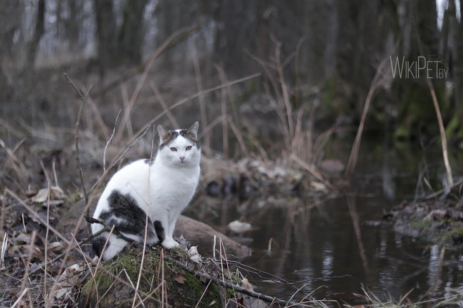 Кошка сидит на берегу реки