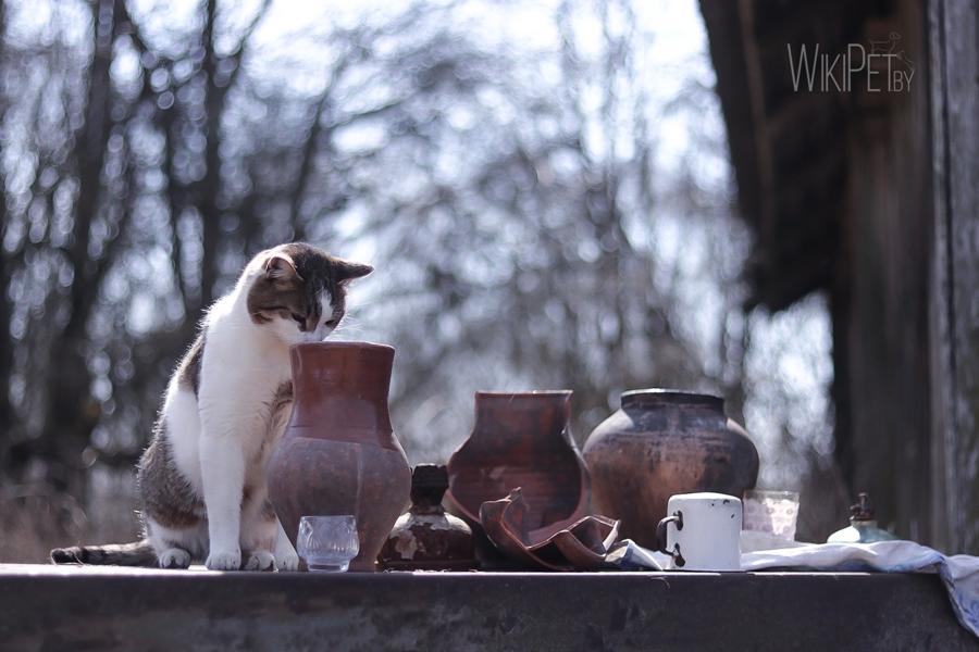 Кошка смотрит в кувшин