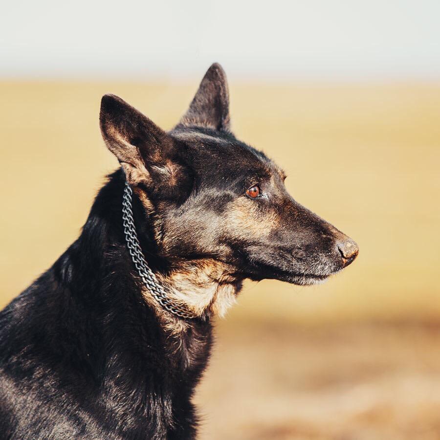 пес,собака,овчарка,требуется помощь,бездомное животное