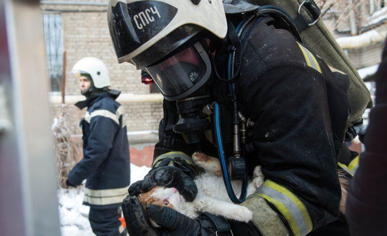 кот,пожар,спасатели,МЧС,массаж сердца