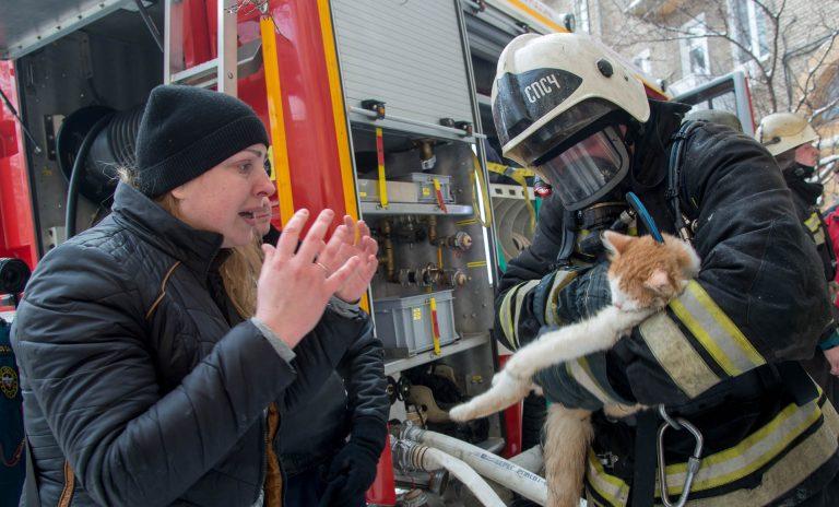 кот,домашнее животное,пожар,питомец,МЧС