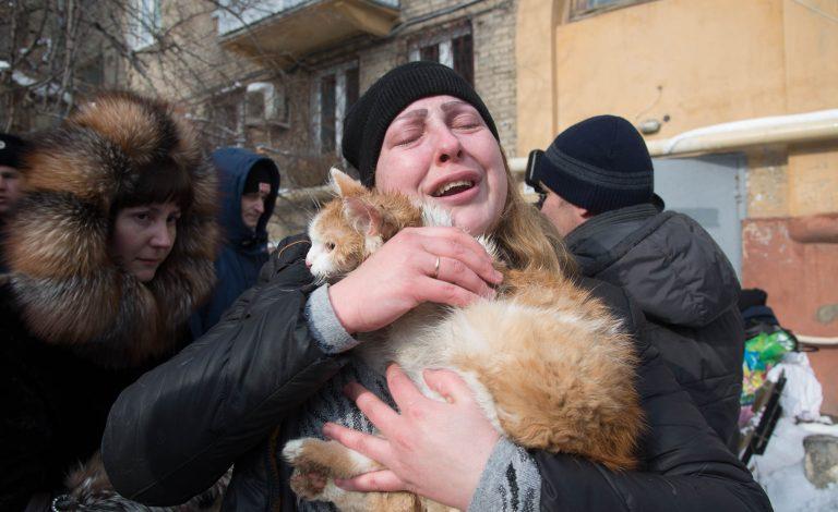 кот,домашнее животное,пожар,мчс