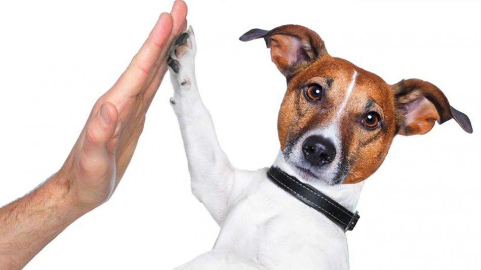 Человек здоровается с собакой фото