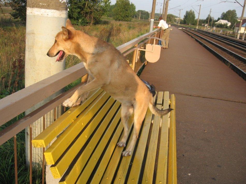 Собака на вокзале фото