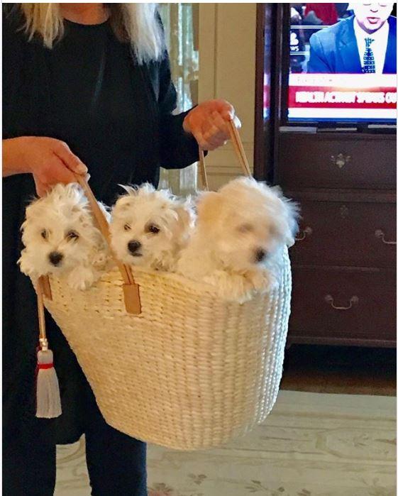 барбара стейзанд,собака,пес,домашнее животное,клонирование
