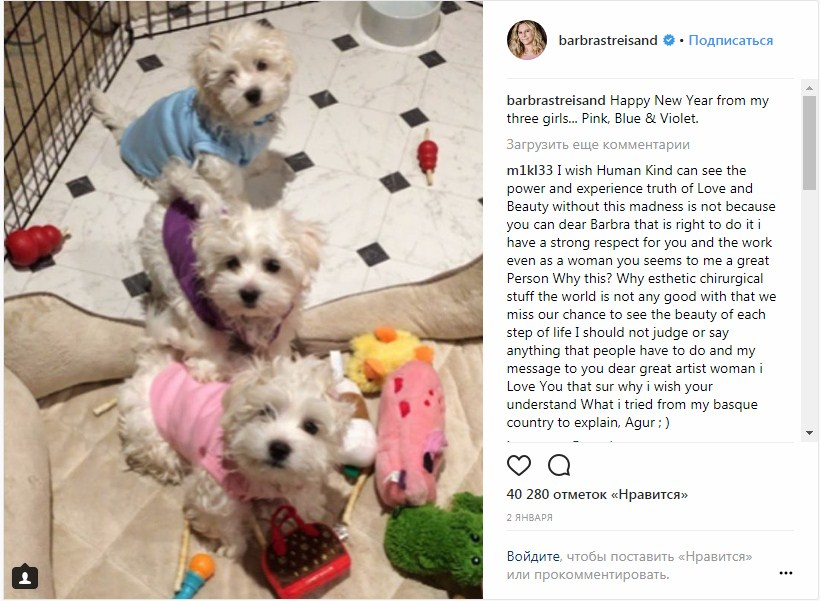 собака,пес,барбаба стрейзанд,клонирование