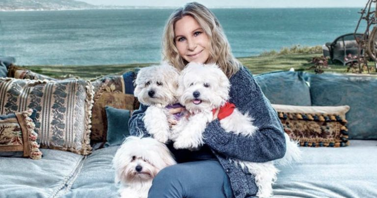 собака,пес,домашнее животное,барбара стрейзенд