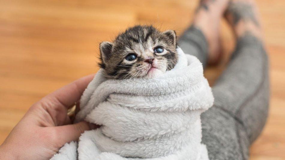Котенок в полотенце фото