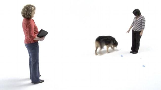 Диагностические игры с собакой коммуникация фото