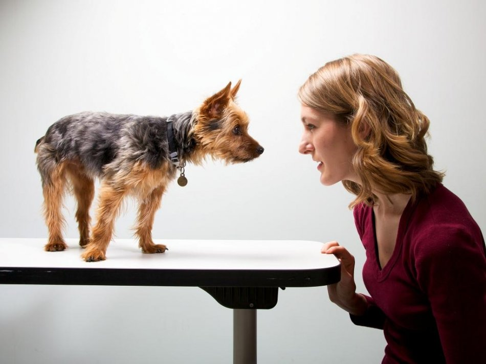 Коммуникация с собакой фото