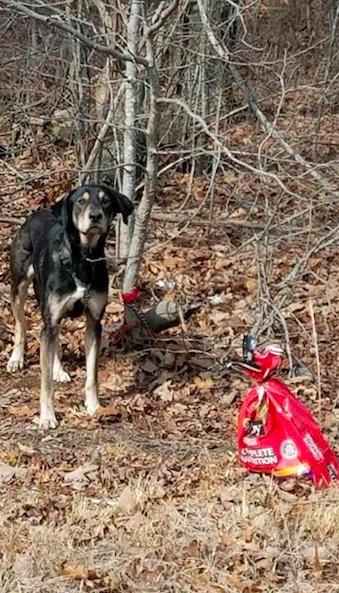 собака,пес,корм,лес,требуется помощь