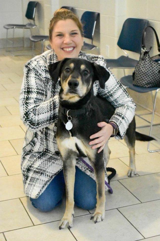 собака,пес,бездомное животное,требуется помощь