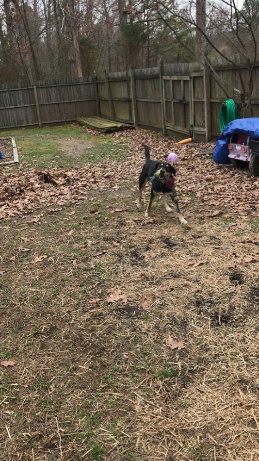 собака,пес,бездомное животное