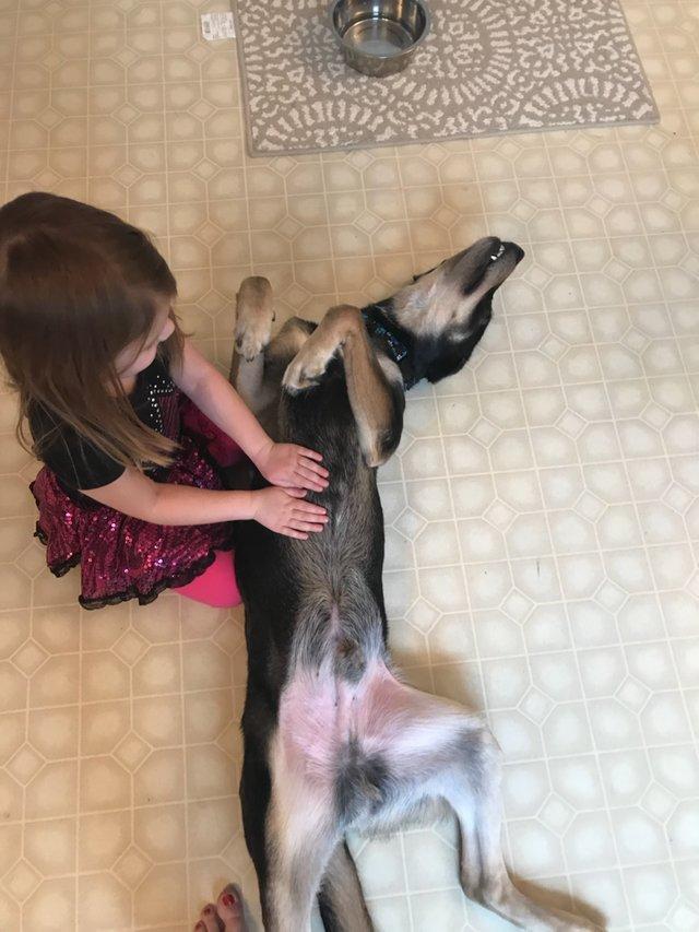 пес,собака,пес,бездомное животное