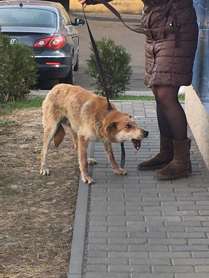 собака, пёс, домашнее животное, дикое животное, спасение