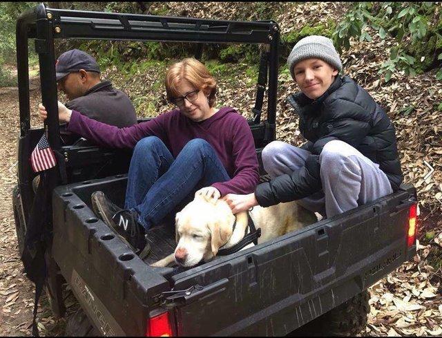 собака,пес,лабрадор,лес,требуется помощь