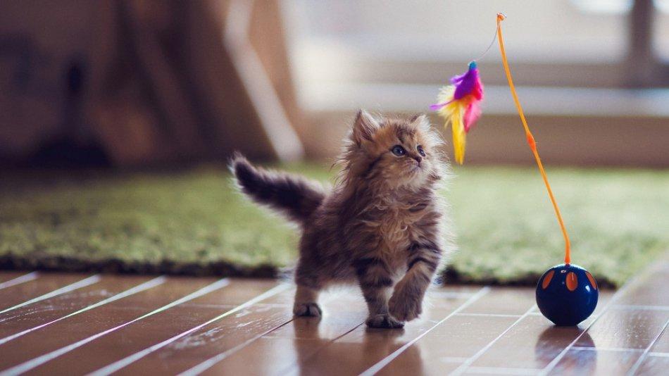 Котенок играет фото