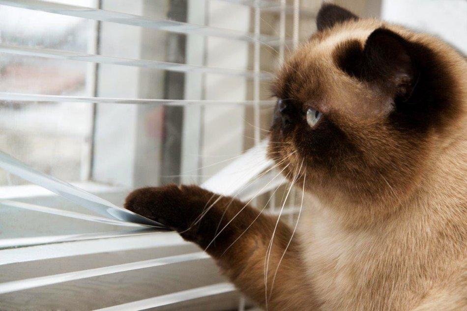 Кошка смотрит в окно фото