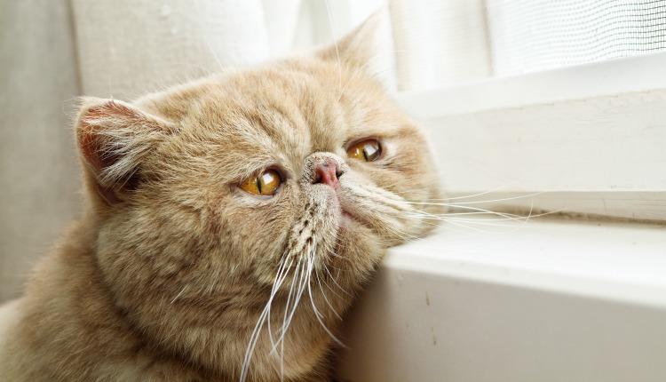 Кошка одна дома фото