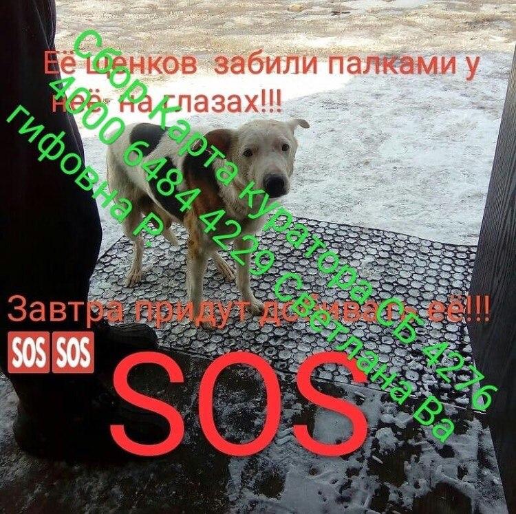 собака,пес,домашнее животное,приют,требуется помощь