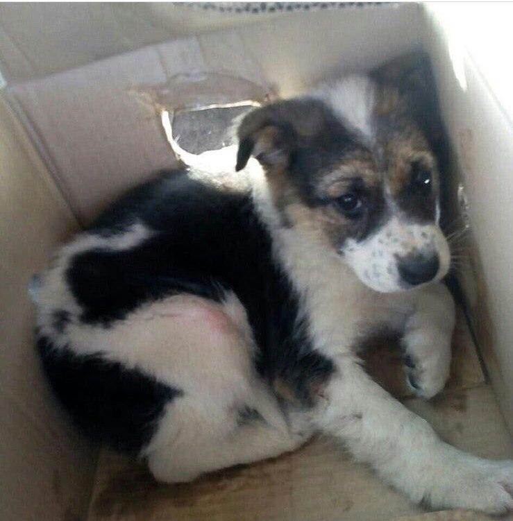 собака,пес,требуется помощь,домашнее животное,щенок,коробка