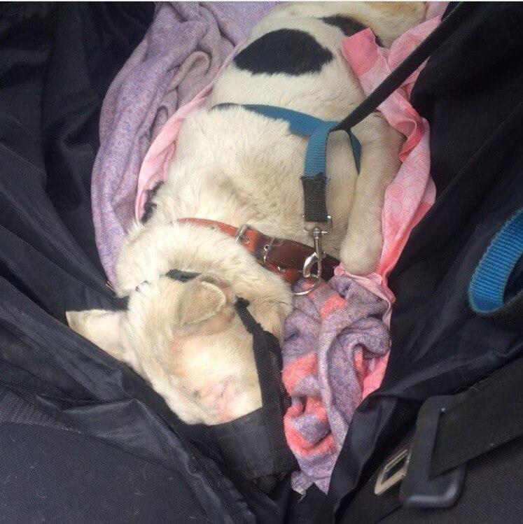 собака,пес,требуется помощь,домашнее животное,бездомное животное